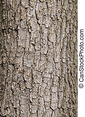 corteza, árbol