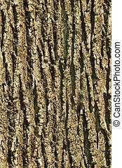 corteza, textura, árbol, seamless, plano de fondo