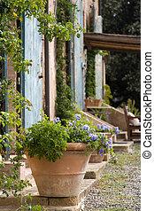 cortijo, olla planta, terracota, exterior, toscano