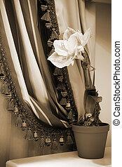 cortinas, flor, plano de fondo
