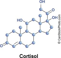 Cortisol is a steroid hormone, in the glucocorticoid class...