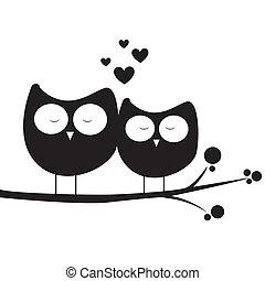 coruja, amor