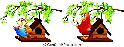 coruja, birdhouse, livro, leitura, papagaio
