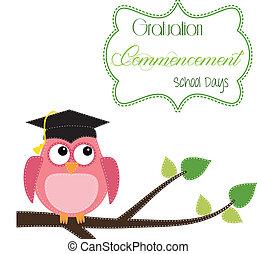 coruja, boné, ramo, graduação, sentando