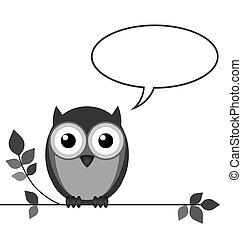 coruja, conversa