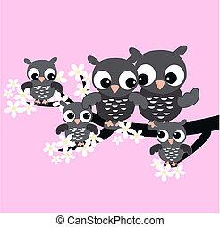 coruja, família