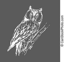 coruja, mão, desenhado, preto branco