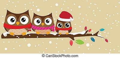 coruja, ramo, natal familiar