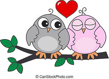 corujas, amor, dois