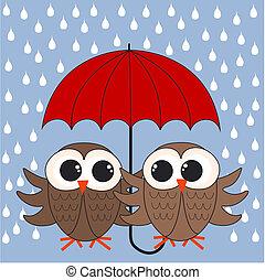 corujas, guarda-chuva, dois