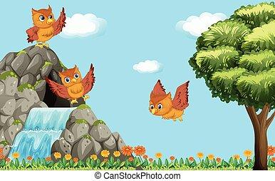 corujas, sobre, voando, três, cachoeira