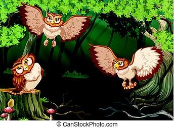 corujas, voando, floresta, três
