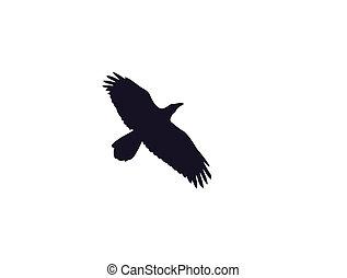 corvo, silueta