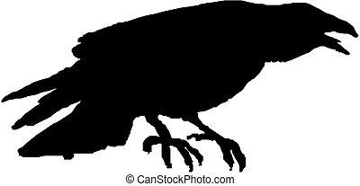 corvo, vetorial, silueta