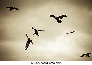 corvus, woning, splendens, vlucht, kraaien