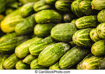cosecha, fresco, cucumbers., plano de fondo, verde