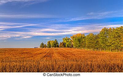 cosechado, campo de trigo, en, indio, verano