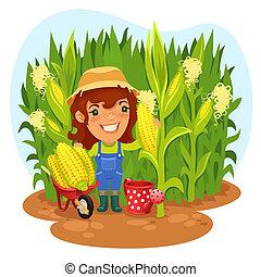cosechar, campo de maíz, hembra, granjero