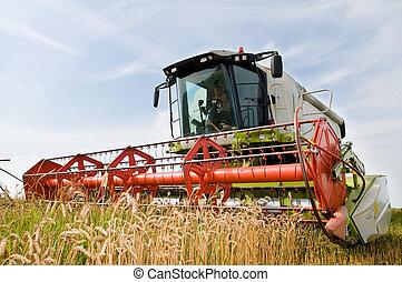 cosechar, combinar, en, el, campo de trigo