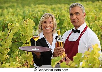 cosechas, su, cultivadores, vino