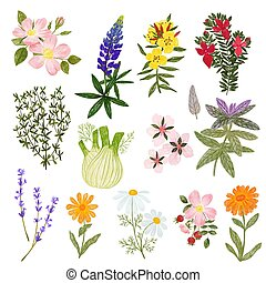Cosmetic plants, pencils hand drawn cute style, vector illustration