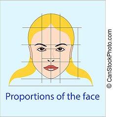 cosmetologia, esposizione, linee, faccia, vettore, facciale,...