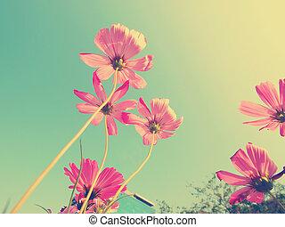 cosmo, fiori, blu, cielo, (vintage, tone)