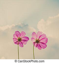 cosmos, flores, en, cielo, y, nube, vendimia