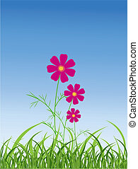 Cosmos Flower - Cosmos flower in the nature
