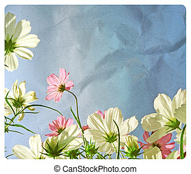 Cosmos flower in the field, soft light on old paper texture. (Vintage)