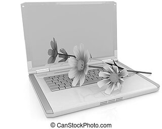 cosmos flower on laptop