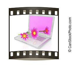 cosmos flower on laptop. The film strip