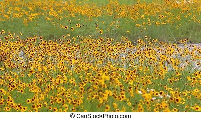 cosmos flowers - Field of colorful cosmos flowers