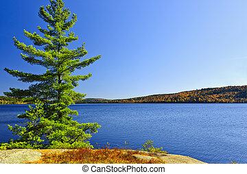 costa, árvore, lago, pinho