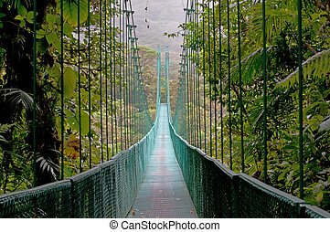 costa, 森林, 橋, 掛かること, monteverde, 雲, rica