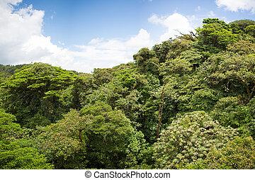 costa, 森林, 雲, rica