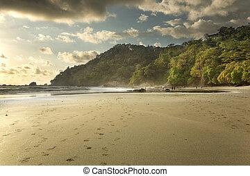 costa, 浜, ジャングル, rica
