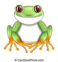 costa, 紅色看的樹青蛙, 綠色, agalychnis callidryas, rica