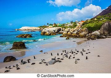 costa atlântica, praia