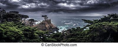 costa, california, árbol solitario, ciprés