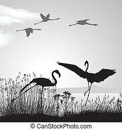 costa, flamingo, lago