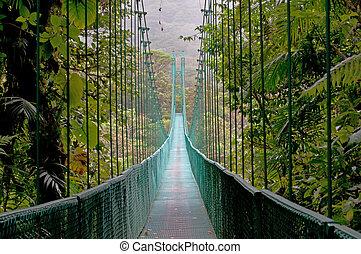 costa, forêt, pont, pendre, monteverde, nuage, rica