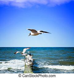 costa, gaivotas, mar