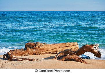 costa, mar, tronco