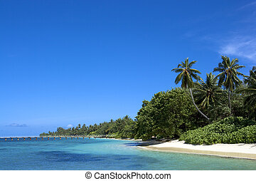 costa, océano indico