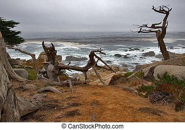 costa, oceânicos, pacífico