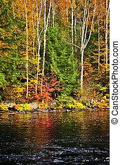 costa, outono, floresta lago