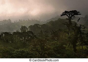 Costa Rica Cloud Forest - Dense Costa Rica tropical cloud...