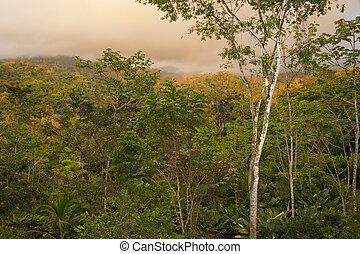Costa Rica Cloud Forest
