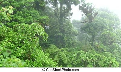 Costa Rica Forest Canopy Jungle - View of Monteverde...
